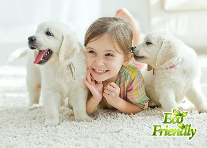 nyc pet stains and odor removal cleaning services New York city