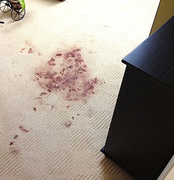 New York Pet Stains & Odor Removal